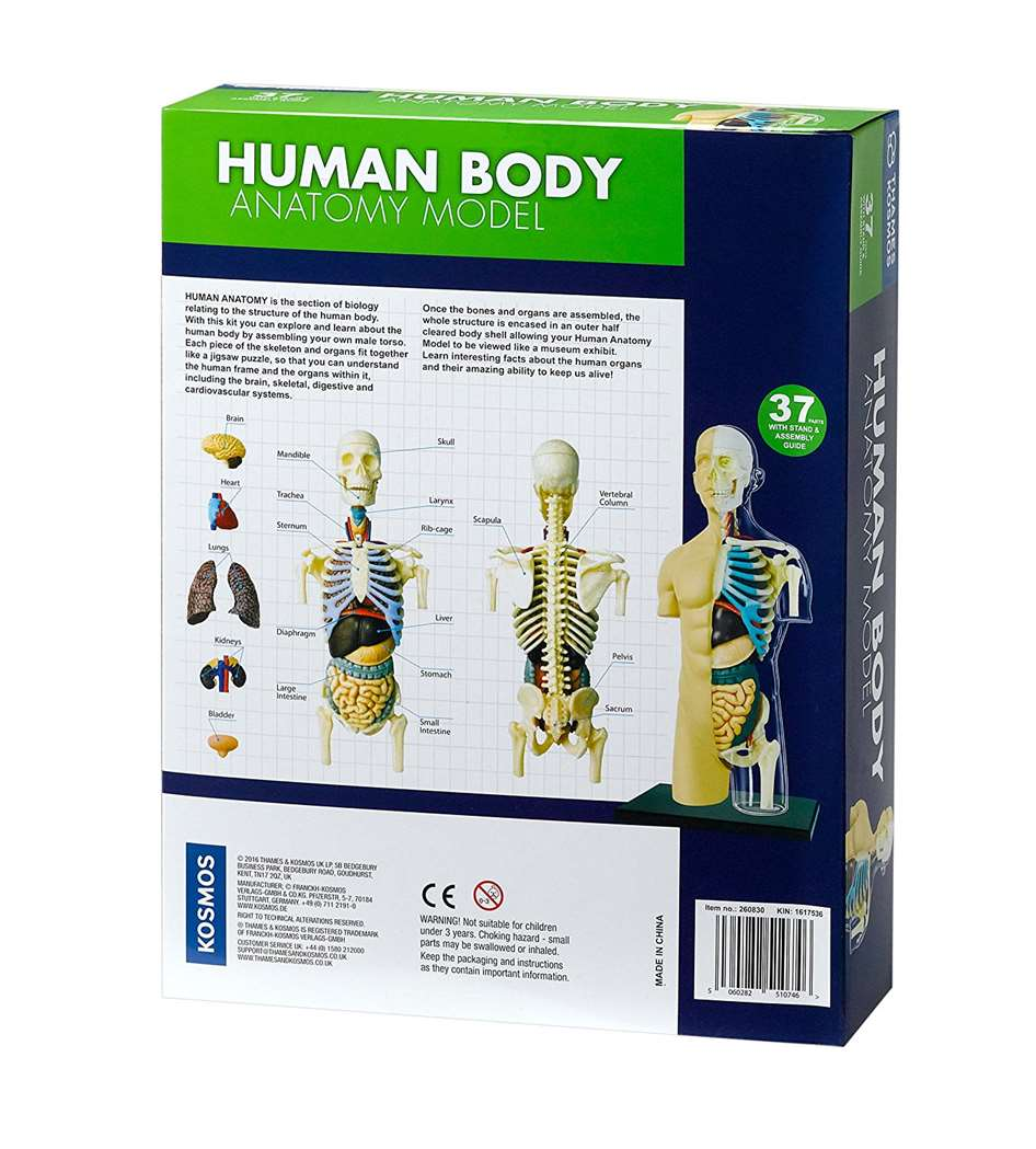 Model ľudského tela