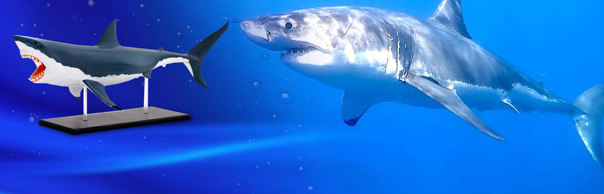 shark-background2